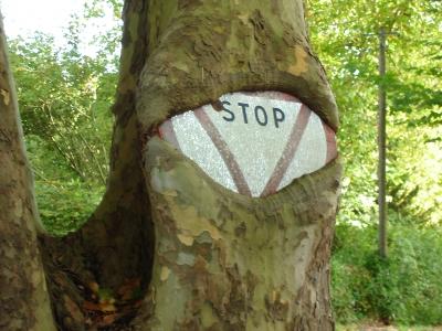 arbre-panneau-stop